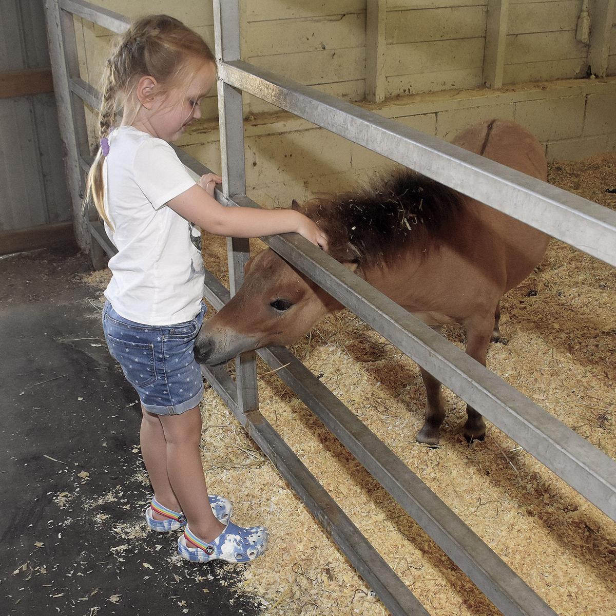 8 19 Fair 1 Birth Pony.jpg