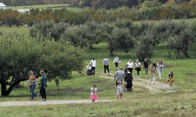 8 5 WIlliams Orchard