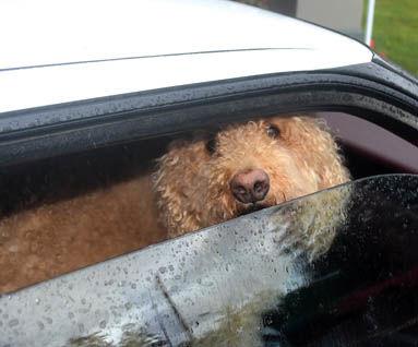 7 17 WEB 2 COVID test dog.jpg