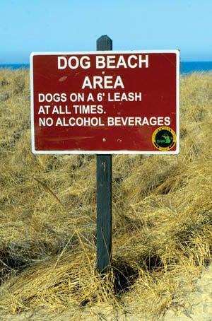 Dog Beach Sign