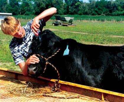 8 14 Fair 1 pre Beef Matthew Moore.jpg