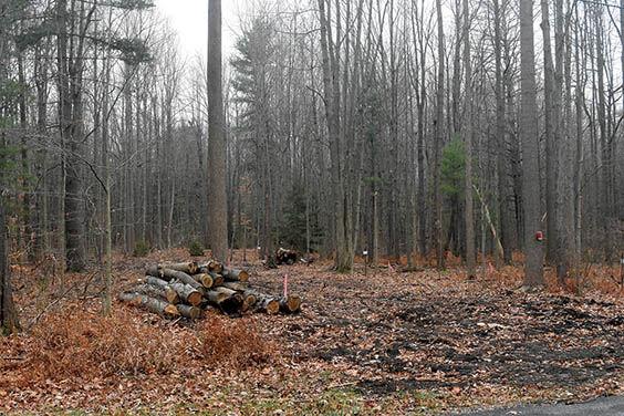 2 4 WEB Harbert Woods 1 fall.jpg