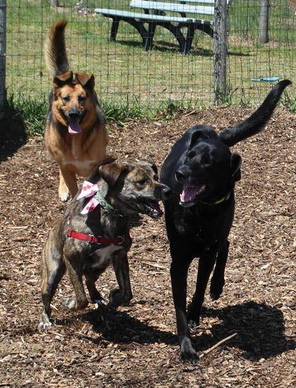 5 10 Dogs 2 frolic trio.jpg