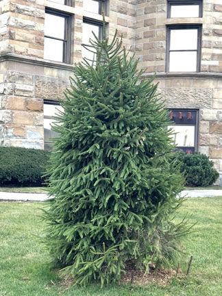 11-27 Cornuelle Tree.jpg