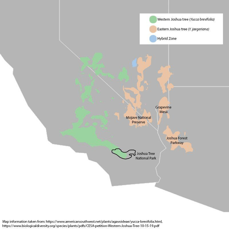 Where Joshua trees are found