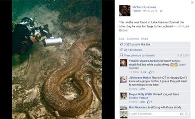 Internet hoax alert: Giant snakes in Lake Havasu?