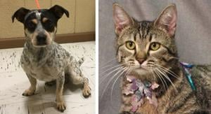 Pets of the Week – October 30, 2019