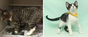 Pets of the Week – January 15, 2020