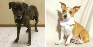 <p>These pets are available for immediate adoption at local animal shelters.</p>