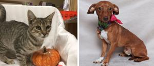 Pets of the Week – October 2, 2019
