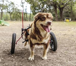 'Jack' paralyzed after gunshot wound