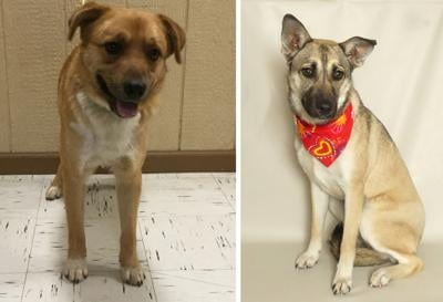 Pets of the Week – February 5, 2020