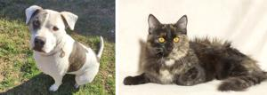 Pets of the Week – January 8, 2020