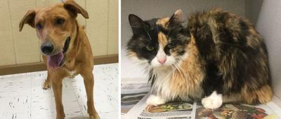 Pets of the Week – May 27. 2020