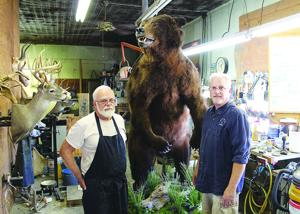 Grizzly project: Huge bear a big, tedious job in local taxidermy shop