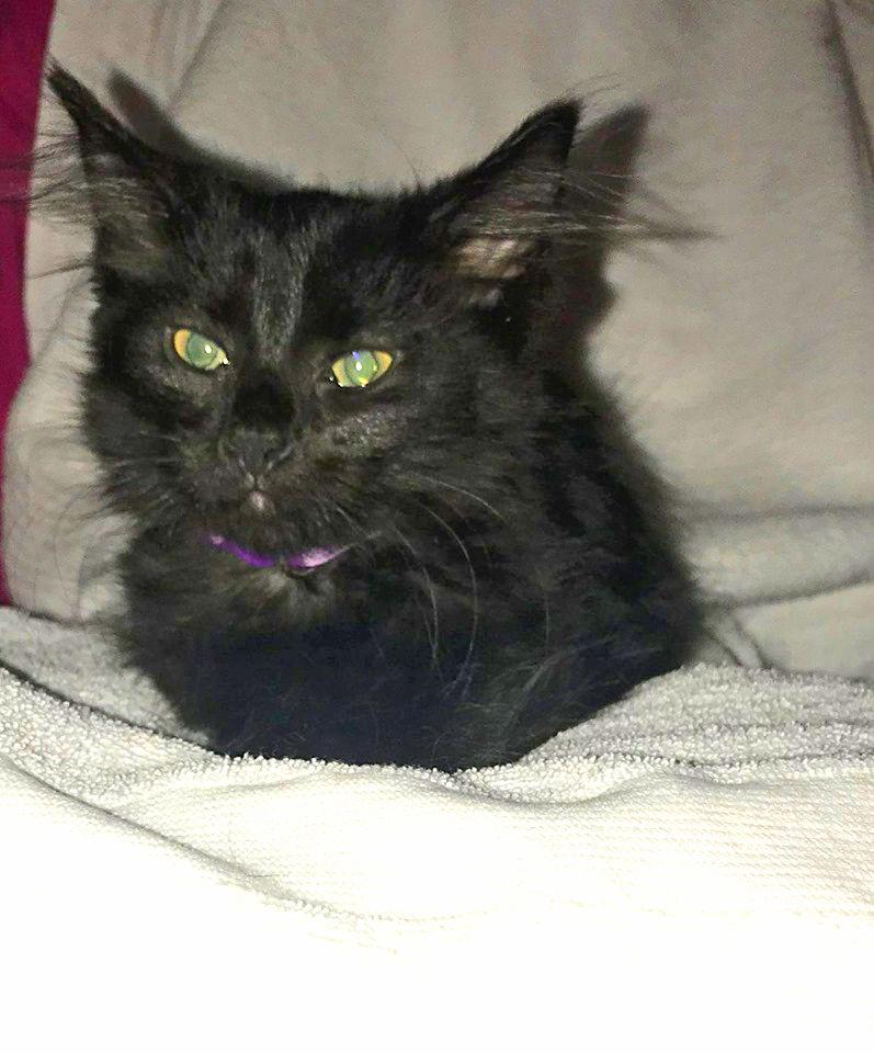 13 week old female kitten image 1