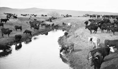 old-montana-water-photo.jpg