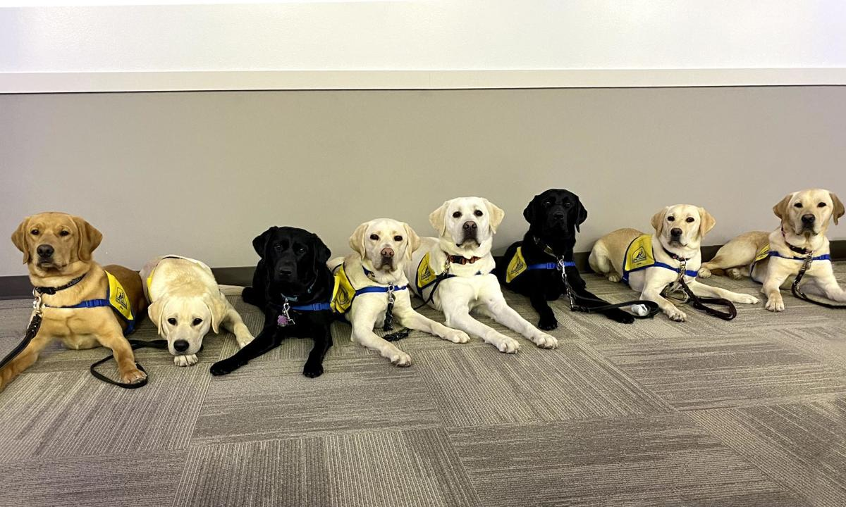 All eight Canine Companions dogs being trained at Carroll College.