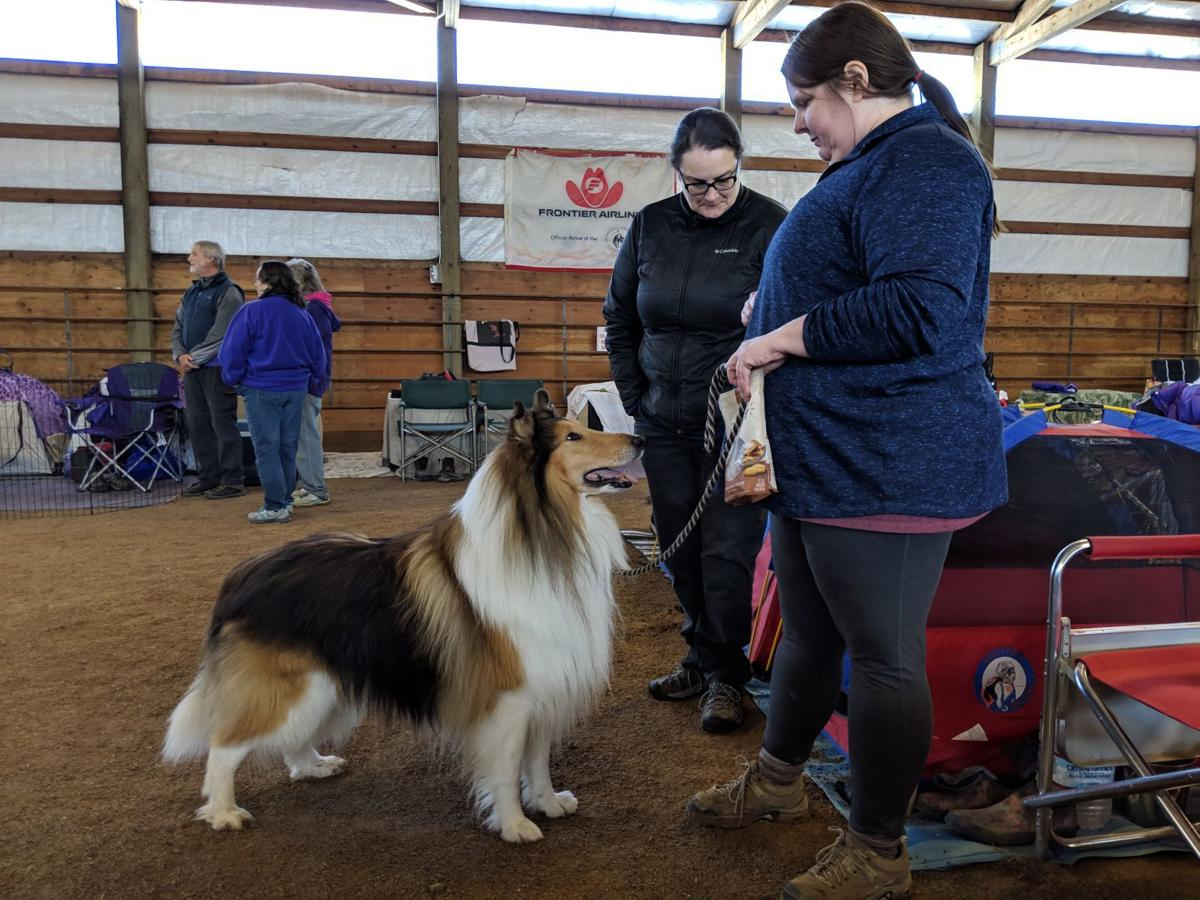 Jeanine Blaner and Ivan the rough collie