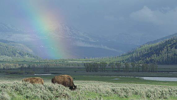 Smithsonian Channel features Yellowstone in new series