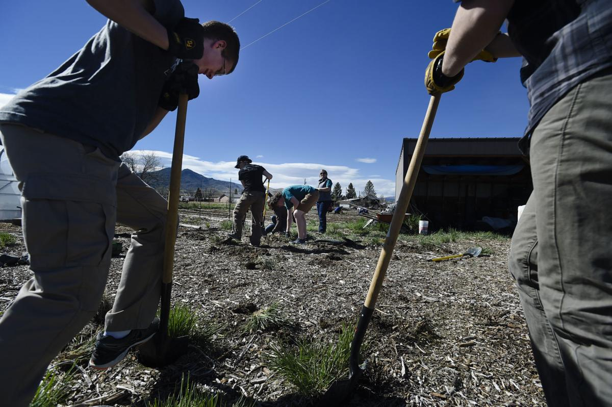 Members of the Helena High School Envirothon Team give a hand at Wood Barrel and Farms last week