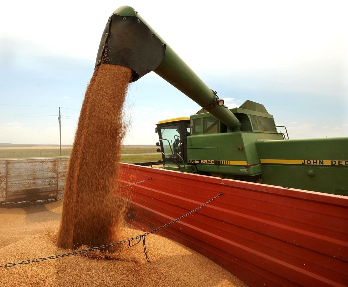 Winter wheat unloading from combine