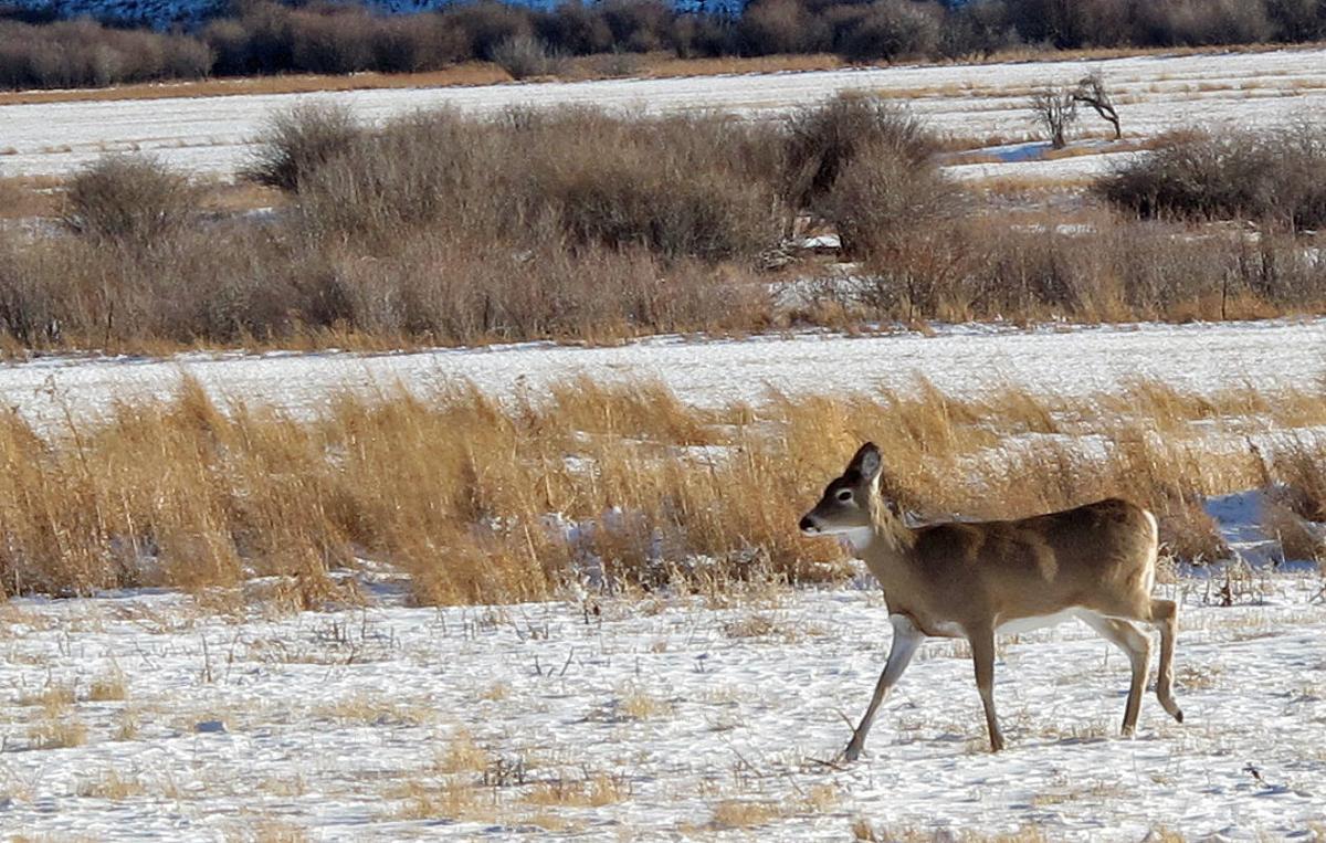 Deer wintering