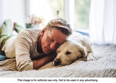 amazing benefits to seniors having pets