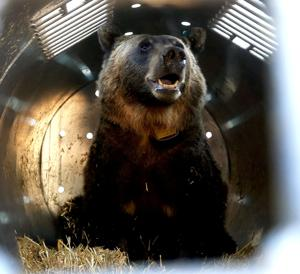 Grizzly advocates can't agree on what's best for the bear
