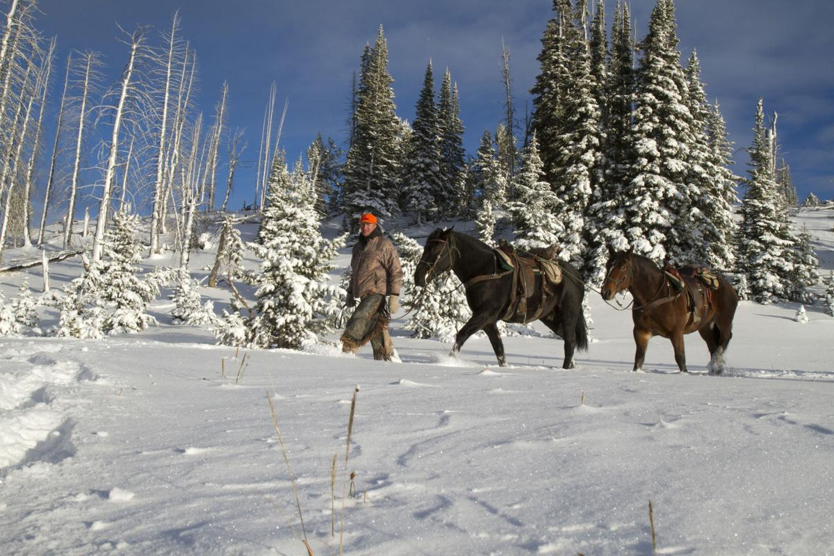 Guy Eastman leads pack horses into the backcountry.