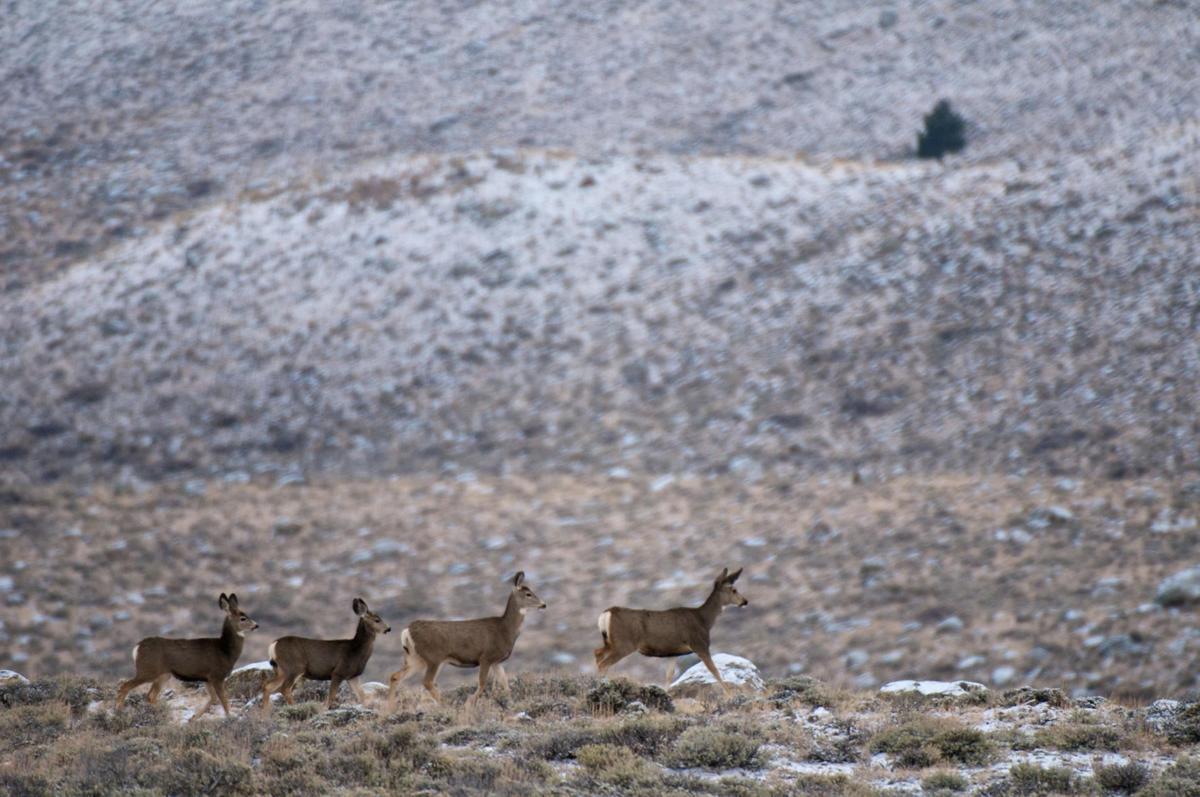 Deer Migration