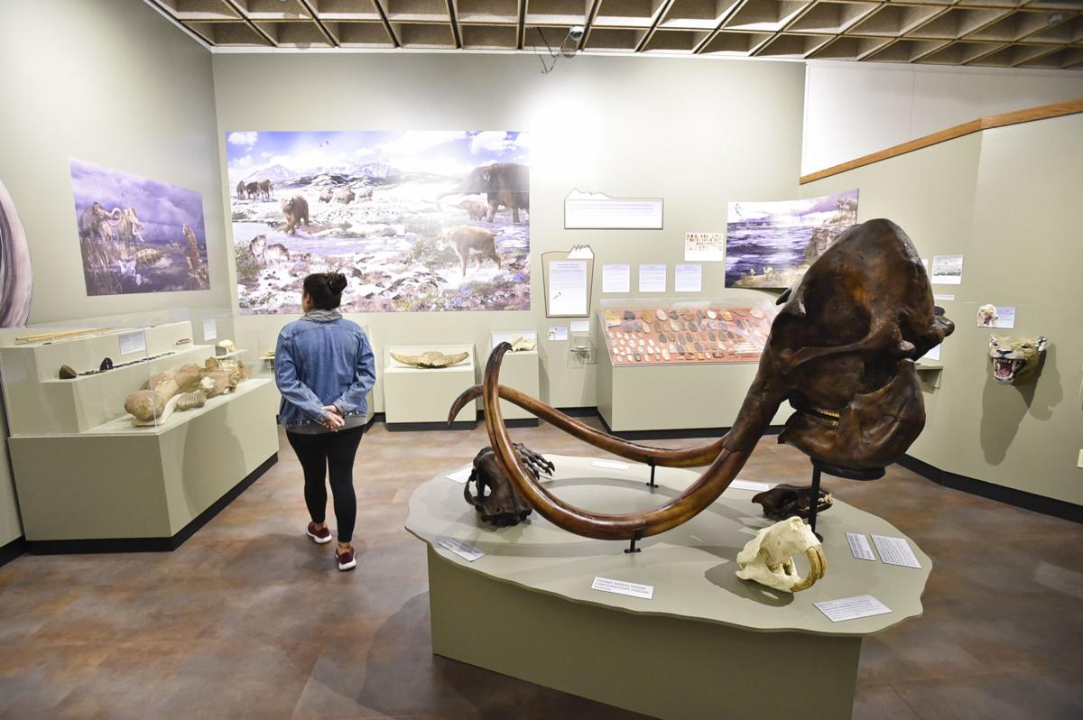 A museum attendant peruses the End of the Last Ice Age