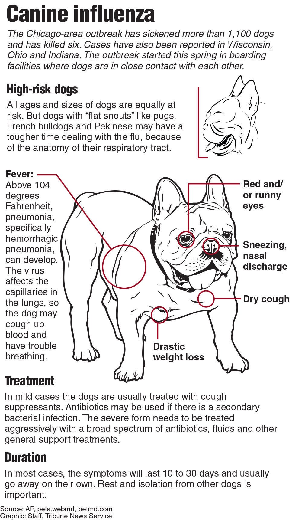 How to tell the difference between canine influenza and the common ...
