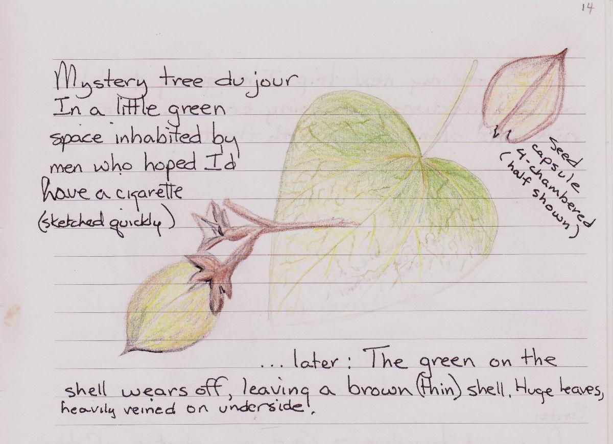 Lyndel leaf