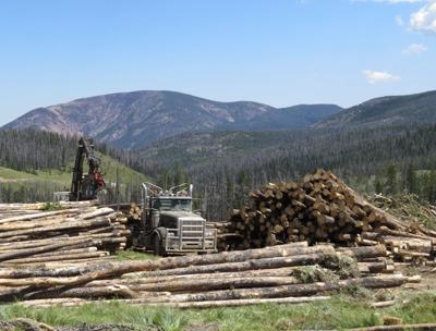 Ten Mile logging