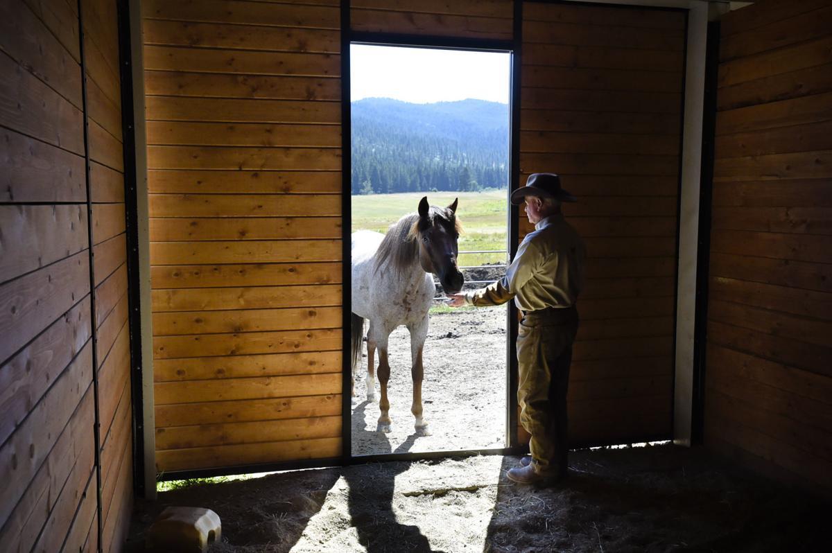 Zinn raises three Paso Fino horses