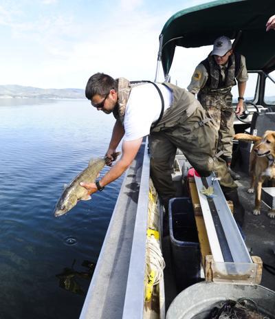 FWP fishery technicians