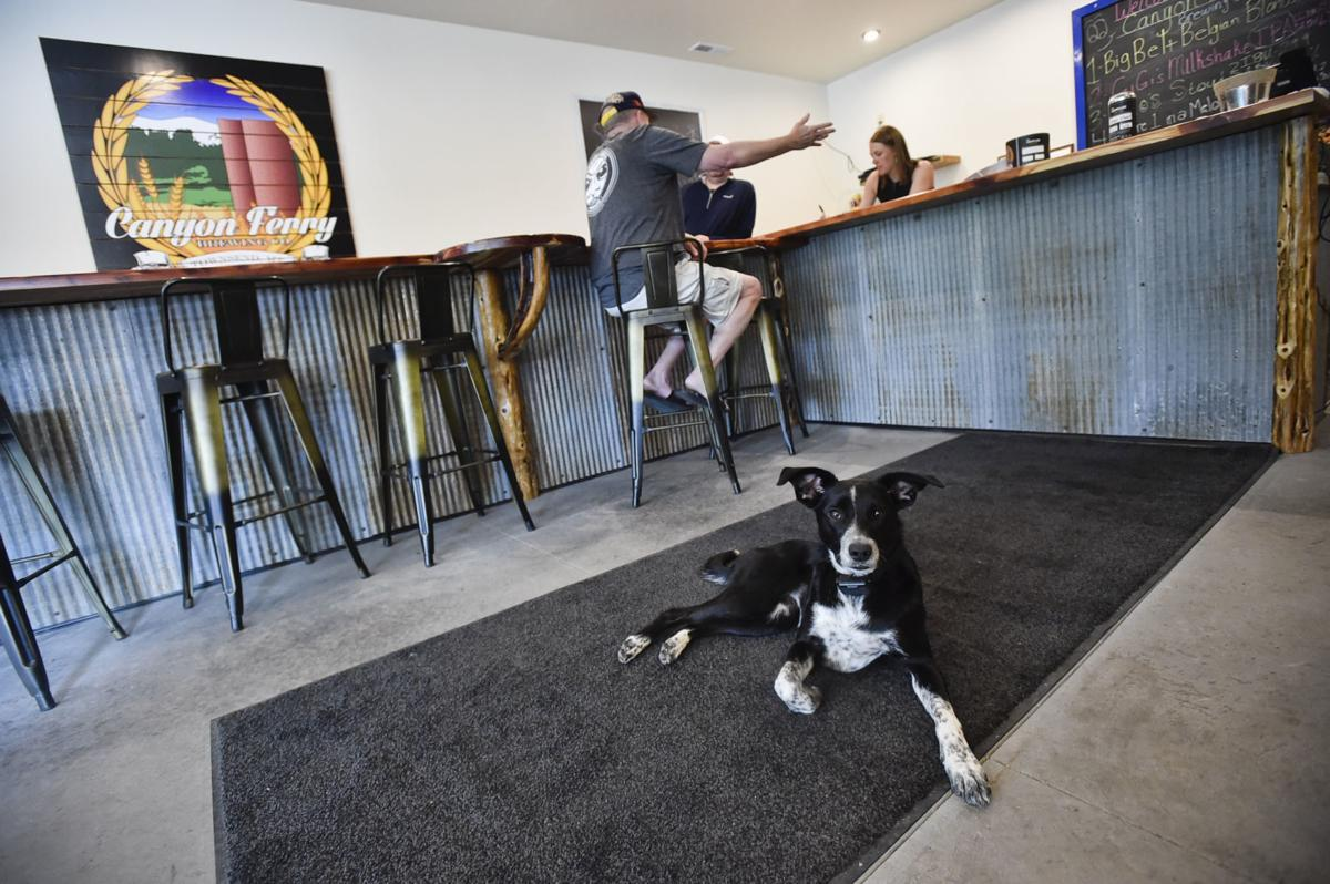 """Rosie, the brewery's """"head of security,"""""""