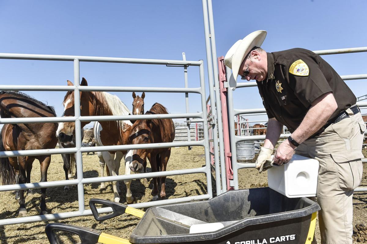 Seized Horses in Helena