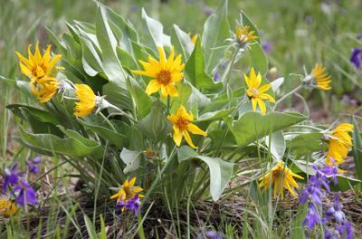 Wildflowers (copy)
