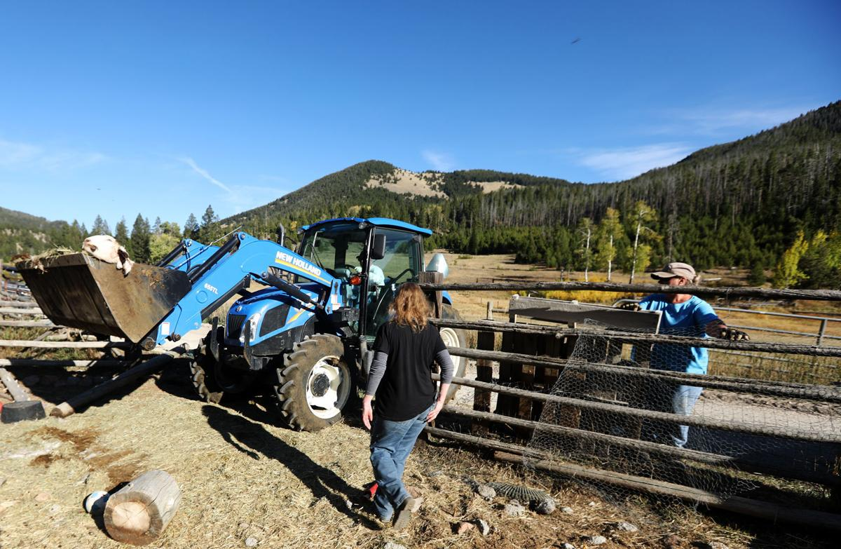 Goats killed in Browns Gulch