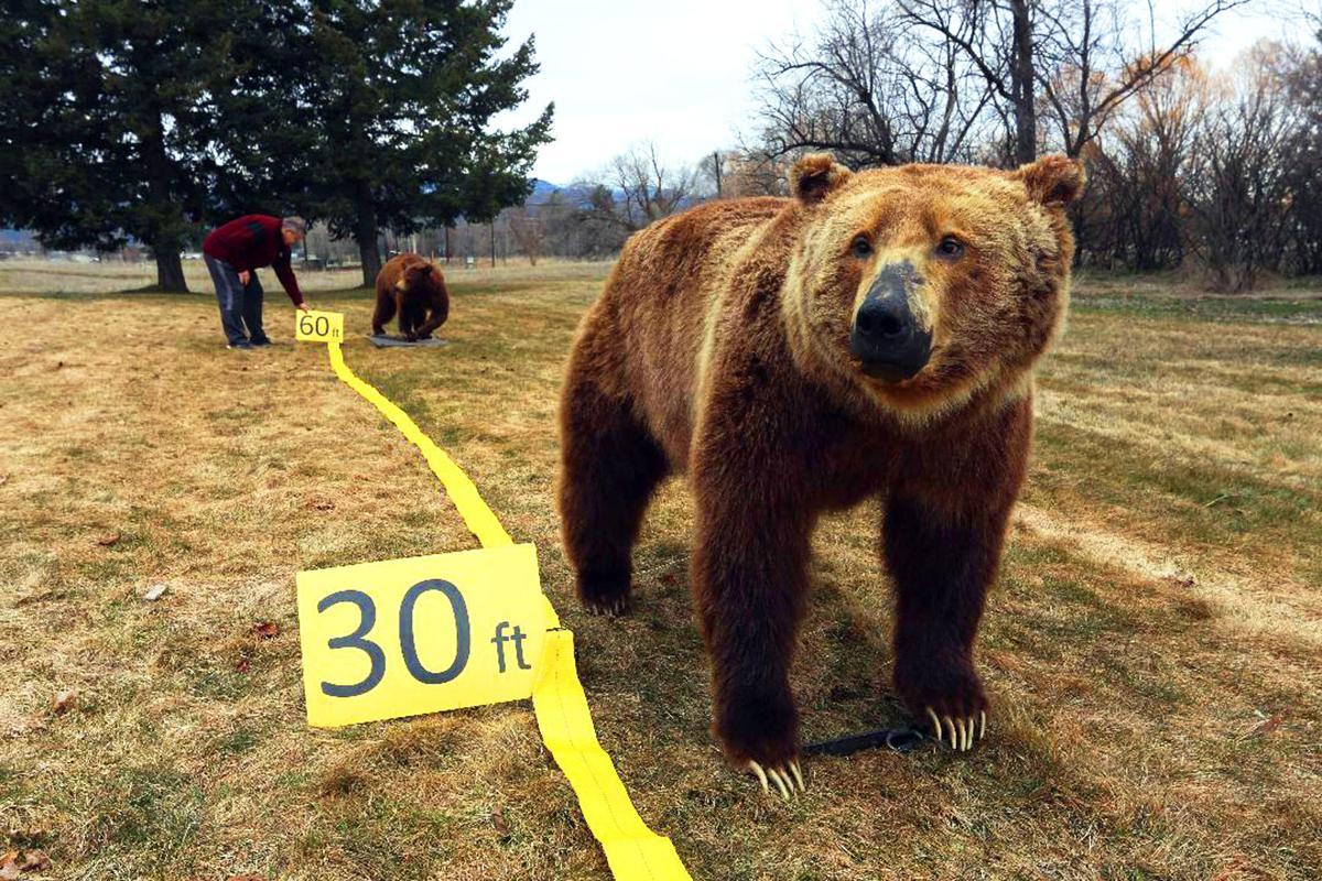 Bear spray (IR copy)