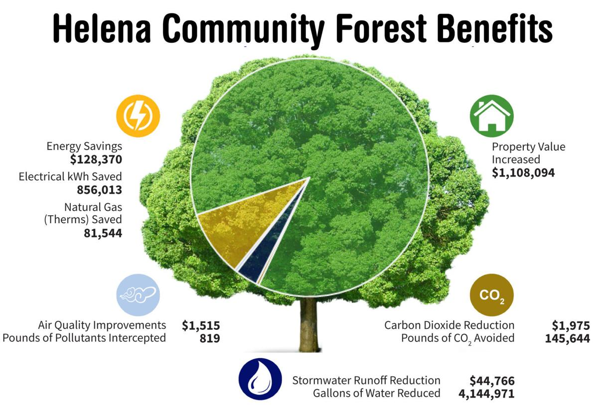 Helena forest benefits