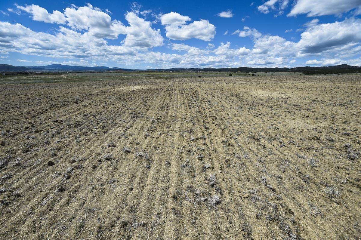 Kim Phillips's dry field in the Helena Valley in 2017