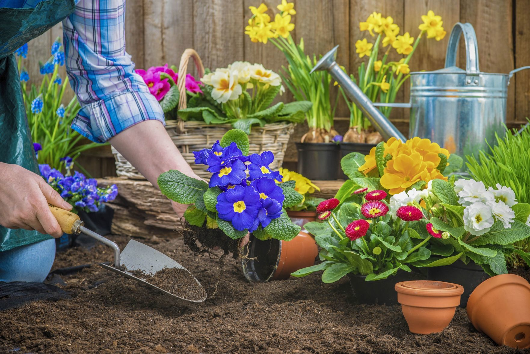 Beau Terry Johnson, Owner Of Johnsonu0027s Nursery And Gardens In Helena, Stresses  Patience Above All Other Tips For Spring Gardening.