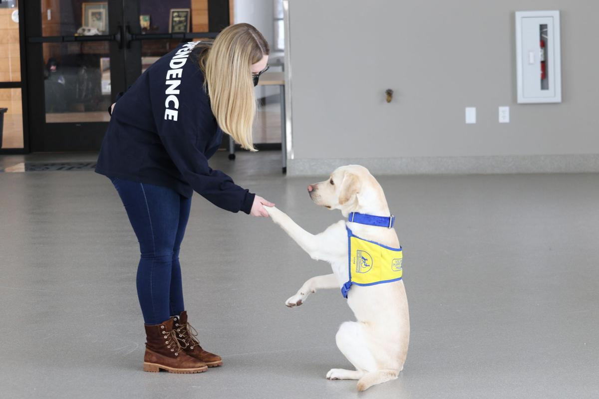 Ashley Wilt works with Canine Companions dog named Phil at Carroll College on Friday.