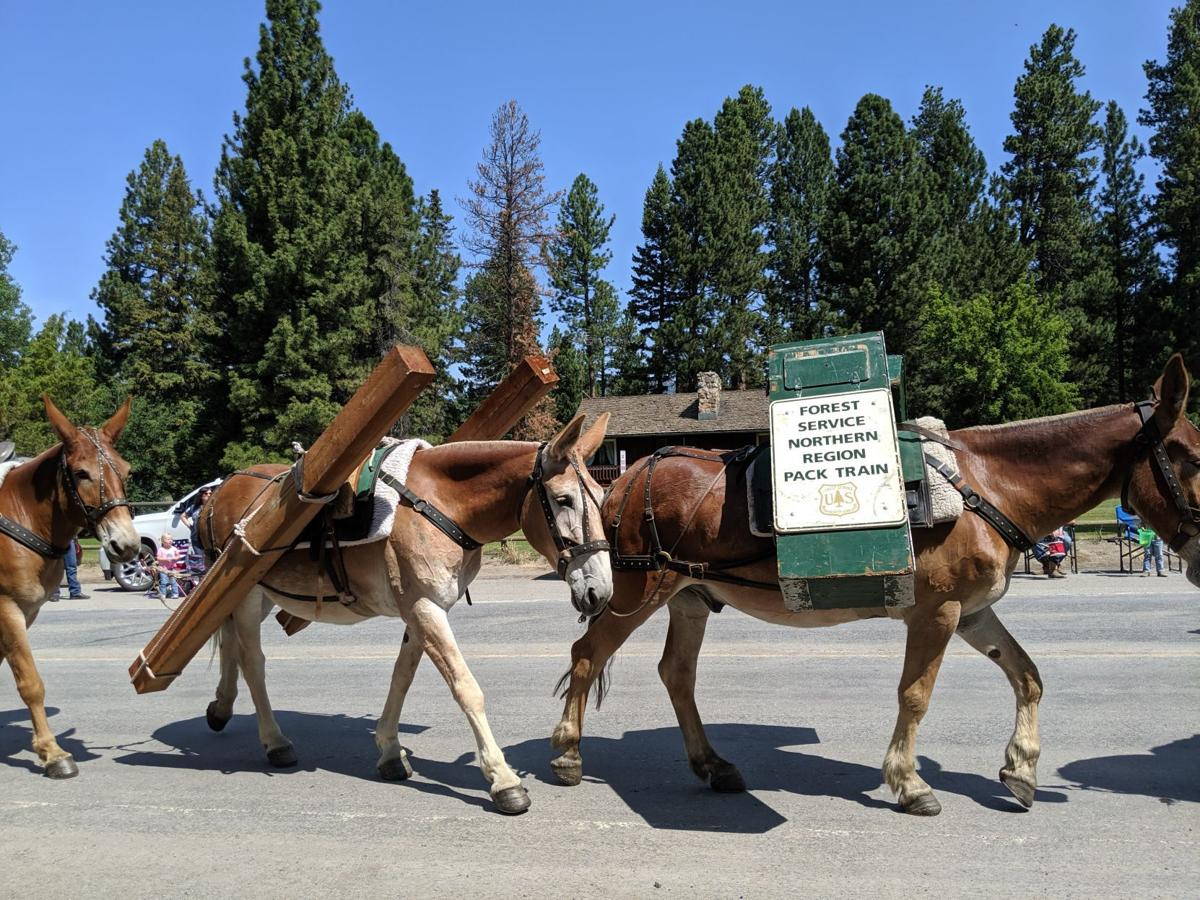 Forest Service Pack mules on parade