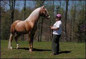 Rare Appalachian Horses Grow In Popularity Outside Region National Helenair Com