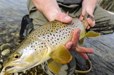 321c38c2ae62 Montana fishing report  Summer begins as rain spikes river flows ...