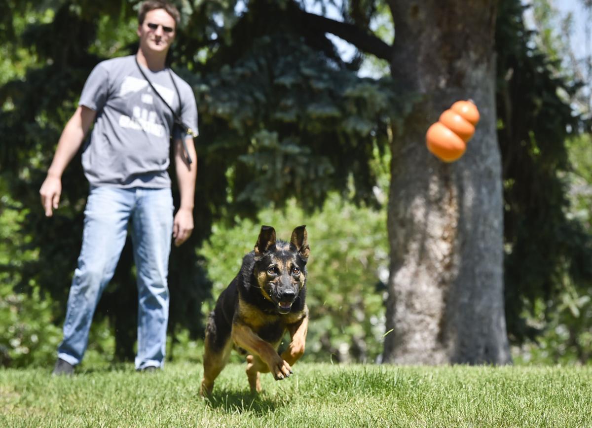 Former HPD senior officer John Kaleczyc throws a dog toy for Din